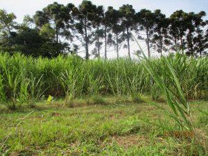 Não-Me-Toque tem primeiro Sistema Agroflorestal (SAF) certificado