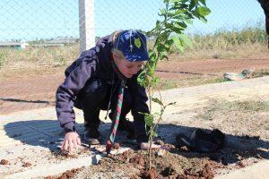94 árvores são plantadas no lançamento do Arboriza Não-Me-Toque
