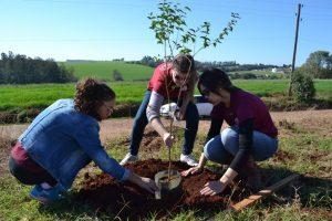 Programa Arboriza Não-Me-Toque realiza novo plantio de mudas