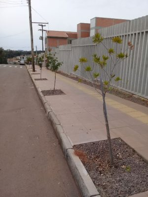 Arboriza Não-Me-Toque da continuidade ao plantio de árvores no Município