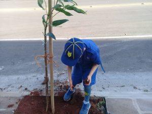 Programa Arboriza Não-Me-Toque encerra atividades do mês do Meio Ambiente 2019
