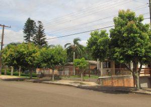 Arborização Urbana: Poda e Plantio, Fique atento à Época