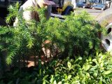 Não-Me-Toque recebe 1500 mudas de árvores nativas do projeto Coprel Ecologia